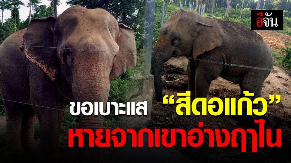 ช้างป่าสีดอแก้ว หายจากเขาอ่างฤๅไน ใครเห็นรีบแจ้งเจ้าหน้าที่!