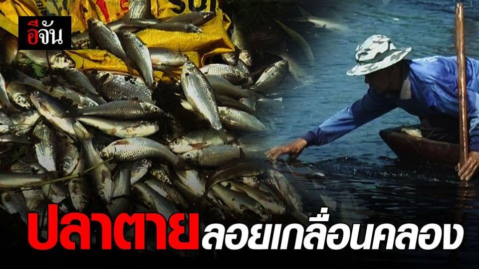 ชาวบ้านร้อง ปลาตายไม่ทราบสาเหตุ!