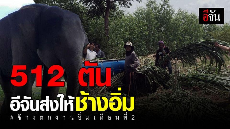 สังคมอีจันรับผิดชอบอาหารช้างตกงานแล้ว ลุล่วงอีก 1 เดือน