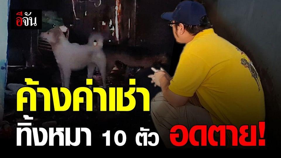 สาวหน้าตาดีค้างค่าบ้านเช่า ทิ้งหมา 10 ตัวอดตาย