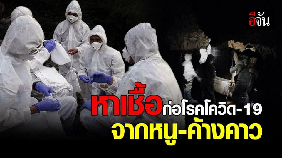 จนท.กรมอุทยานฯ ลุยเก็บตัวอย่างฝนถ้ำค้างคาว หาเชื้อก่อโรคโควิด-19