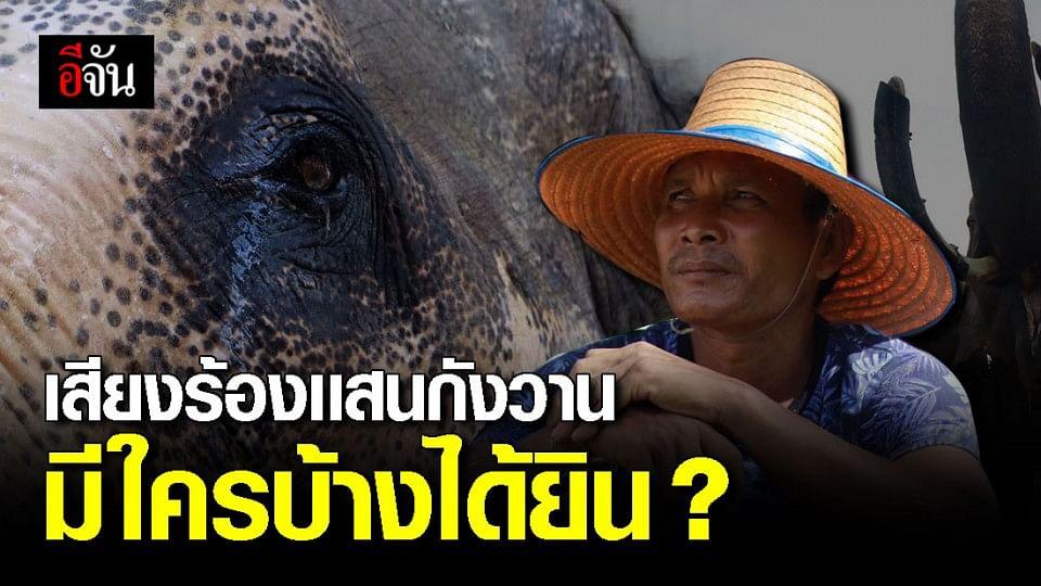 ได้ยินช้างไหม ตั้งเเต่วิกฤติโควิด-19 ชีวิตช้างก็เปลี่ยนไป