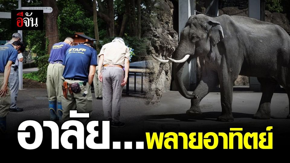 สวนสัตว์อุเอโนะที่ญี่ปุ่น ไว้อาลัยพลายอาทิตย์ ทูตสันถวไมตรีไทย-ญี่ปุ่น