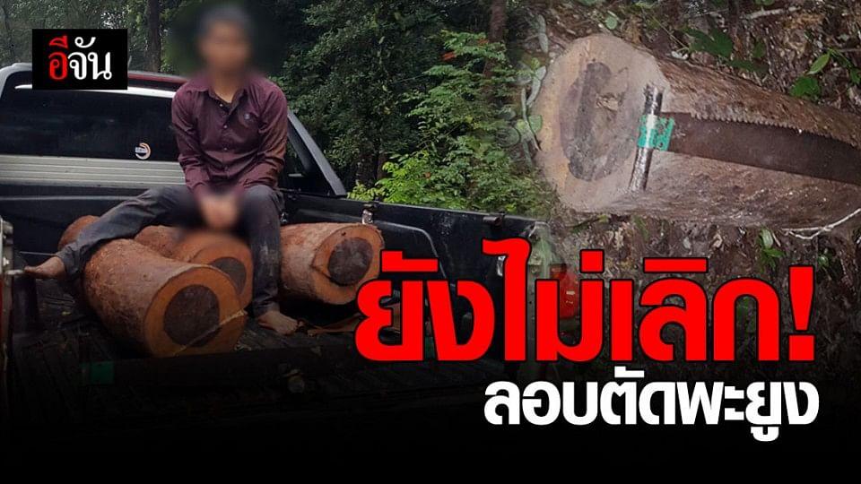 รวบชาวกัมพูชา บุกป่าห้วยทับทัน ลอบตัดพะยูง