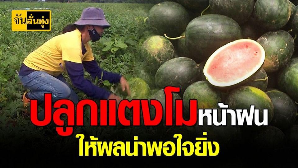 เกษตรกร พิจิตร หัวใสปลูก แตงโมกินรี หน้าฝนแทน ข้าว สร้างรายมากกว่าเดิม 3 เท่า