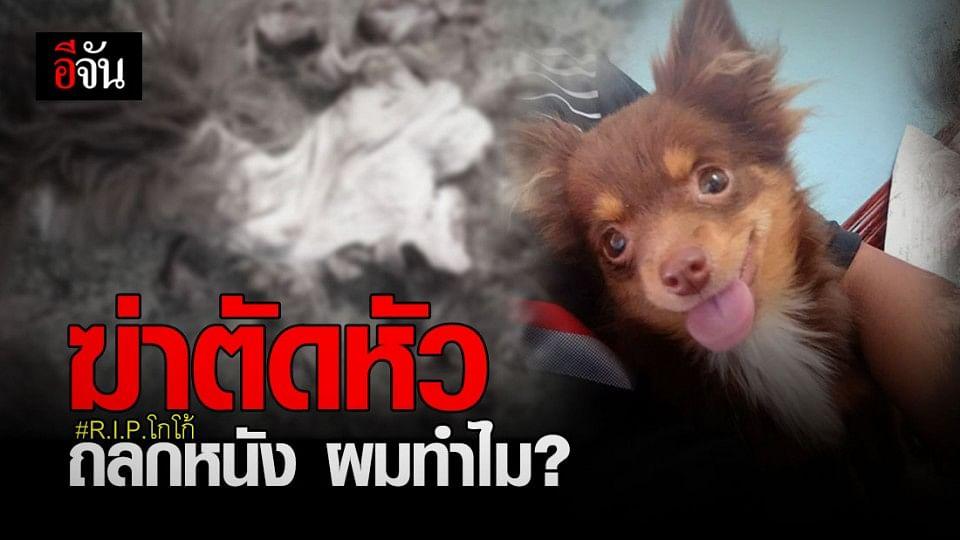 เศร้า ! โกโก้ สุนัขชิวาว่า ถูกคนใจร้าย ฆ่าตัดหัว ถลกหนัง ทิ้งไว้กลางถนนน