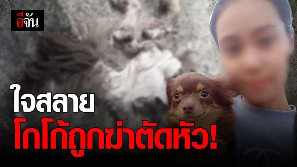 เจ้าของใจสลาย ! โกโก้ สุนัขชิวาว่า ถูก ฆ่าตัดหัว ถลกหนัง อย่างทารุณ