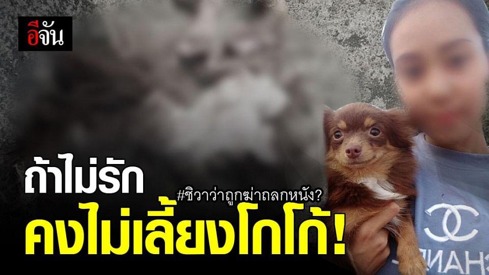เจ้าของ แจงดราม่า ! โกโก้ สุนัขชิวาว่า ถูก ฆ่าตัวหัว ถลกหนัง?