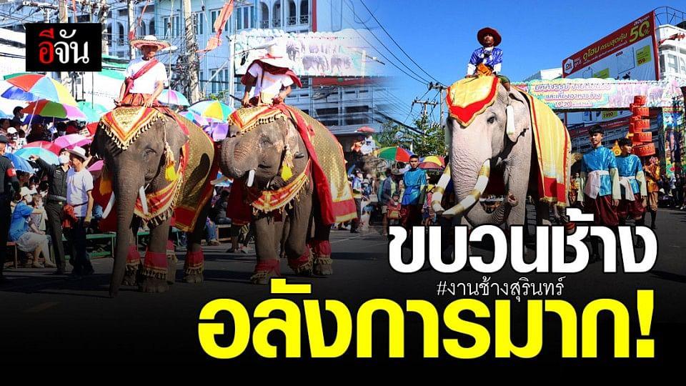 ตระการตา ! ขบวนช้าง ยกทัพสร้างความยิ่งใหญ่ ครบรอบ 60 ปี งานช้างสุรินทร์