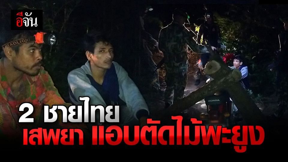 จับ 2 ชายไทย ลักลอบตัดไม้พะยูง ใน ขสป.ห้วยศาลา
