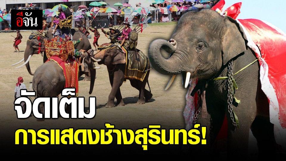 เปิดม่าน การแสดงช้าง ครบรอบ 60 ปี งานช้างสุรินทร์