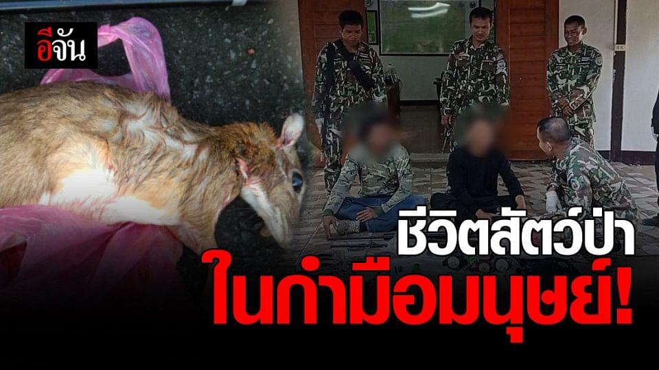 จับ 2 ชายไทย ใจร้าย! ลักลอบล่าสัตว์ป่า เขตรักษาพันธุ์สัตว์ป่าห้วยศาลา