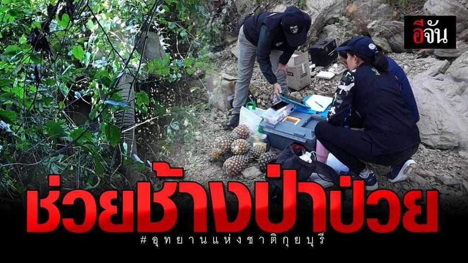 จนท. อุทยานแห่งชาติกุยบุรี ช่วย ช้างป่า ได้รับบาดเจ็บ