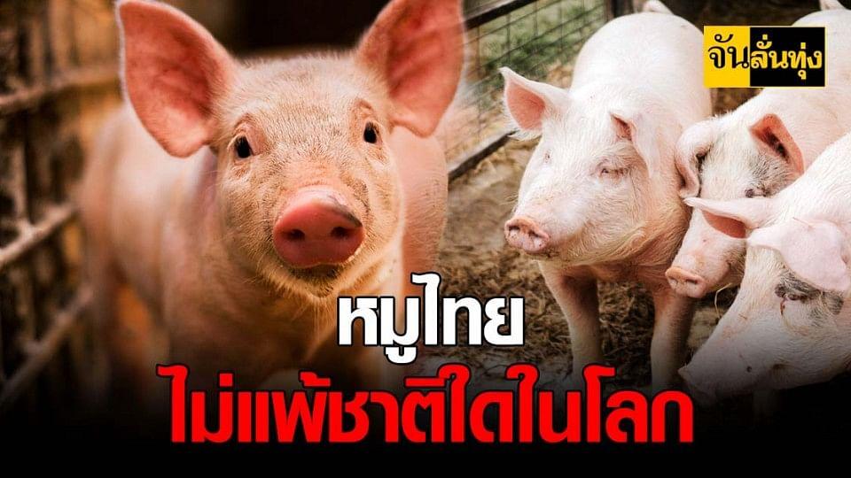 ปศุสัตว์ ยัน หมูไทย ปลอดภัย ส่งออก ได้ไร้ปัญหา