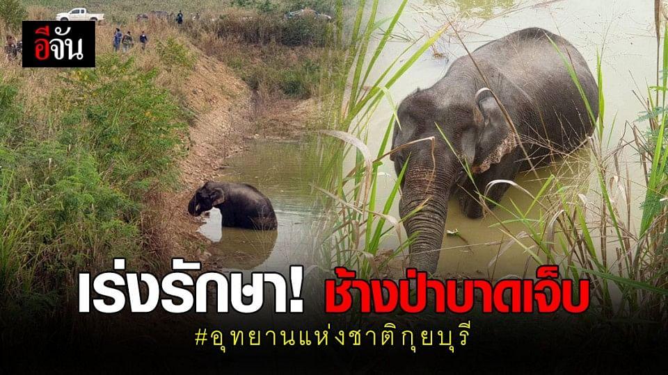 จนท. อุทยานแห่งชาติกุยบุรี – สัตวแพทย์ เร่งรักษา ช้างป่า บาดเจ็บ