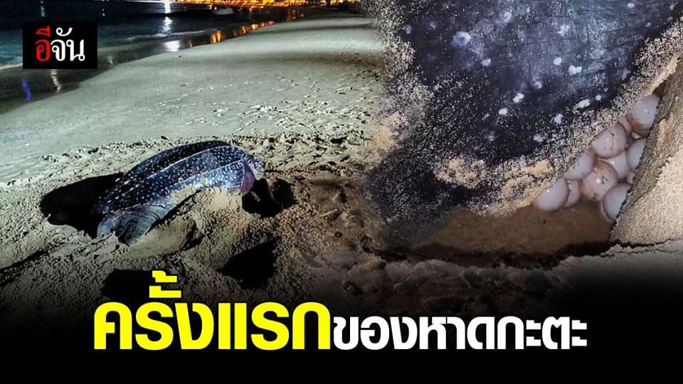 เต่ามะเฟือง วางไข่ หาดกะตะ รับปีใหม่ 2564