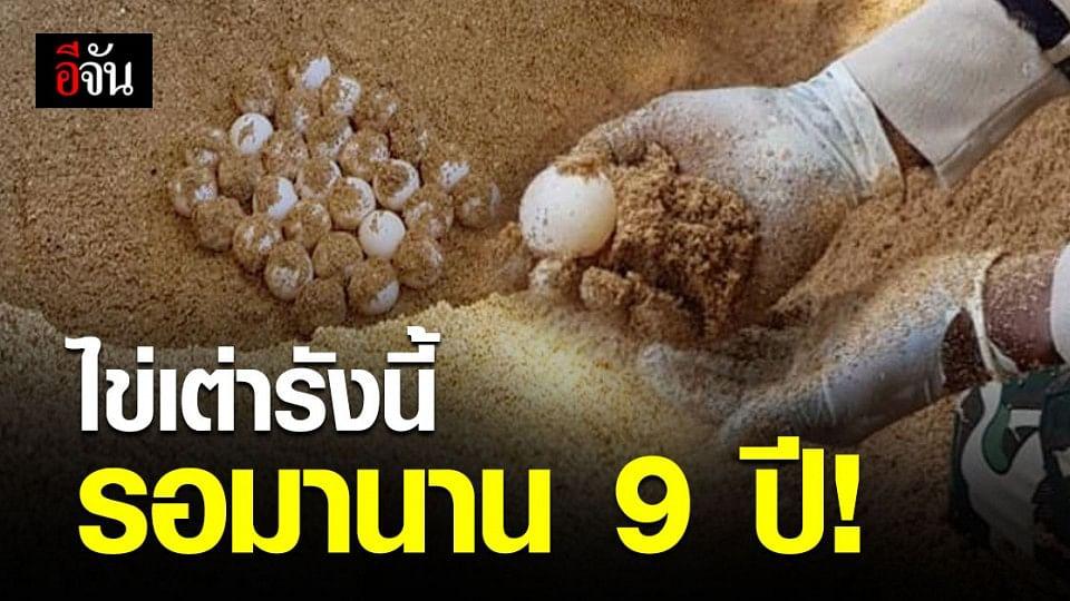 ชาวลิบง เฮ! เจอรัง ไข่เต่าตนุ ในรอบ 9 ปี