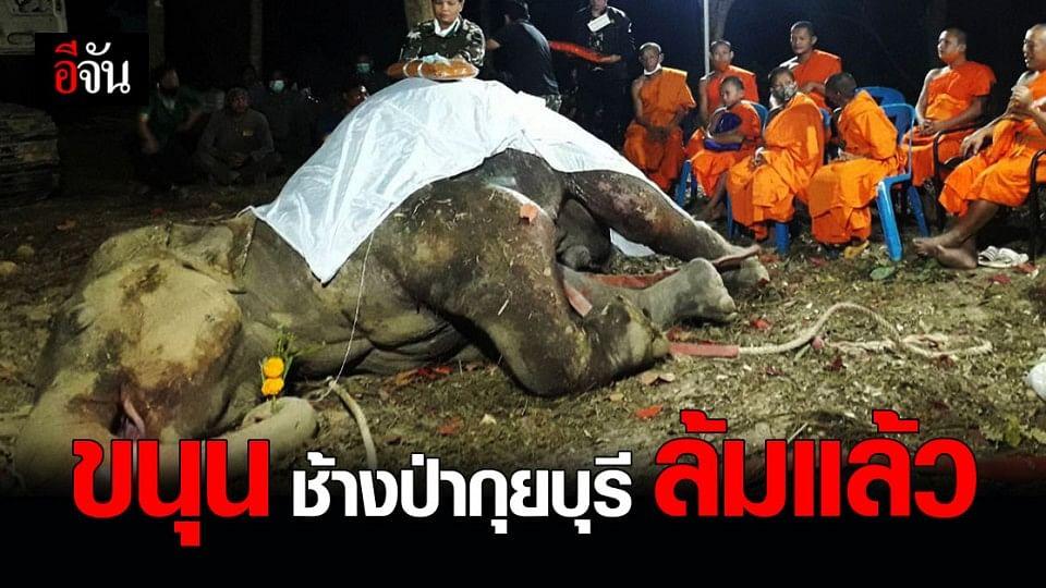 สุดยื้อ! อุทยานแห่งชาติกุยบุรี เผย ช้างป่ากุยบุรีบาดเจ็บ ล้มแล้ว เจอกระสุนทั่วตัว