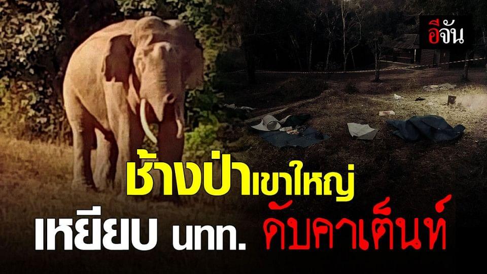 """เขาใหญ่แตกตื่น! ช้างป่า """"พรายดื้อ"""" บุกหาของกิน เหยียบนักท่องเที่ยว ตายคาที่"""