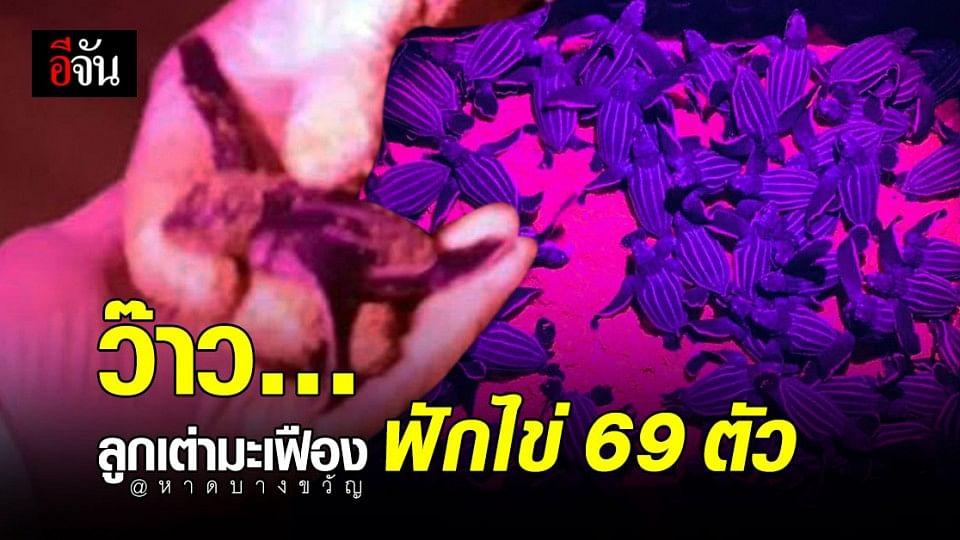 ข่าวดี หาดบางขวัญ พังงา ลูกเต่ามะเฟืองฟักไข่ กว่า 69 ตัว