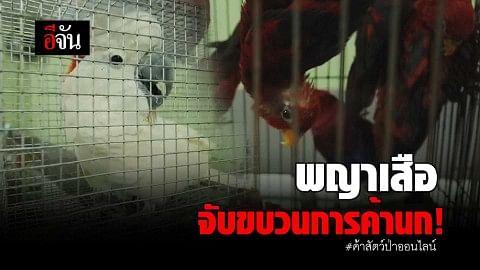 พญาเสือจับขบวนการค้านก! #ค้าสัตว์ป่าออนไลน์