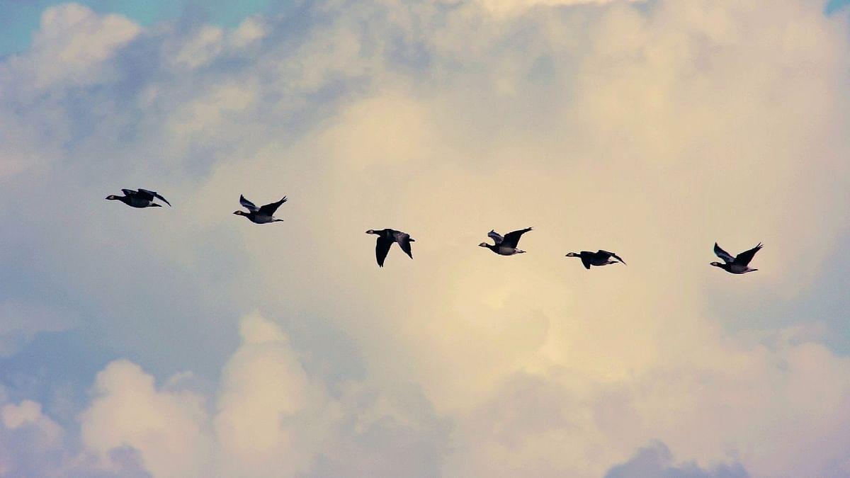 ಅರಿಸ್ಟಾಟಲ್ನಂತಹ ತತ್ತ್ವಜ್ಞಾನಿ ಕೆಲವು ಪಕ್ಷಿಗಳು ತಮ್ಮ ಗರಿಹೊದಿಕೆಯ ಬಣ್ಣವನ್ನು ವಾರ್ಷಿಕವಾಗಿ ಬದಲಿಸುತ್ತವೆ ಎಂದುಕೊಂಡಿದ್ದನಂತೆ