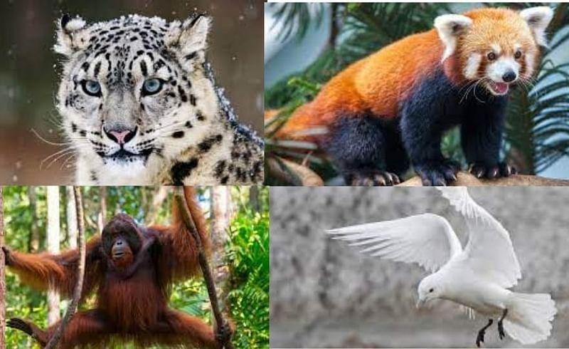 ७ प्राण्यांचं जीवन धोक्यात;  नामशेष होतायेत प्रजाती