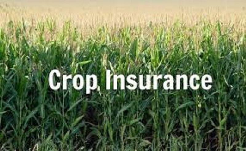 crop insurance plan