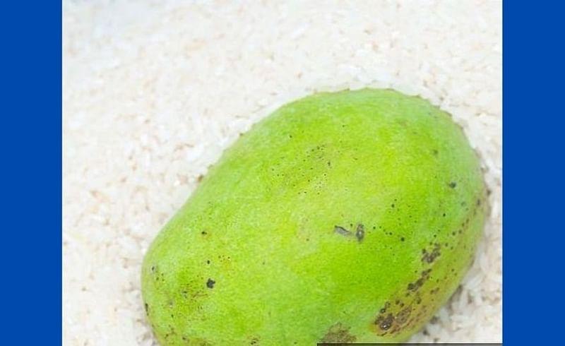 कच्च्या आंब्याला घरातच अशा पद्धतीने पिकवा बाजारातील आंब्या पेक्षाही अधिक स्वादिष्ट