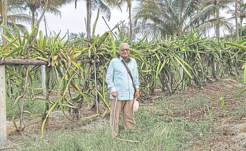 After retiring from a bank at the age of 50 Arun Nilkanth Pradhan planted a dragon orchard at Nimone