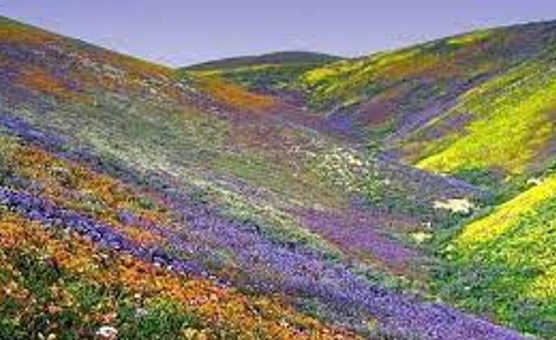 भारतातील प्रसिध्द 'फूलांची दरी'; जायचयं पाहायला, तर मग वाचा !