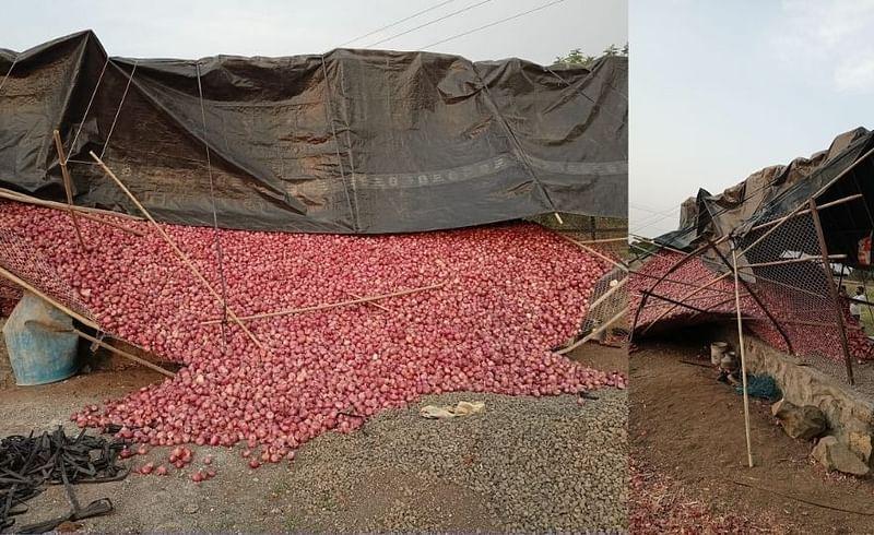 farmer onion