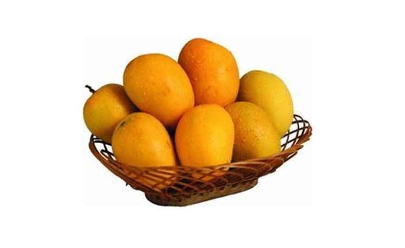 Mango Transport Through Train SIndhudurg Marathi News