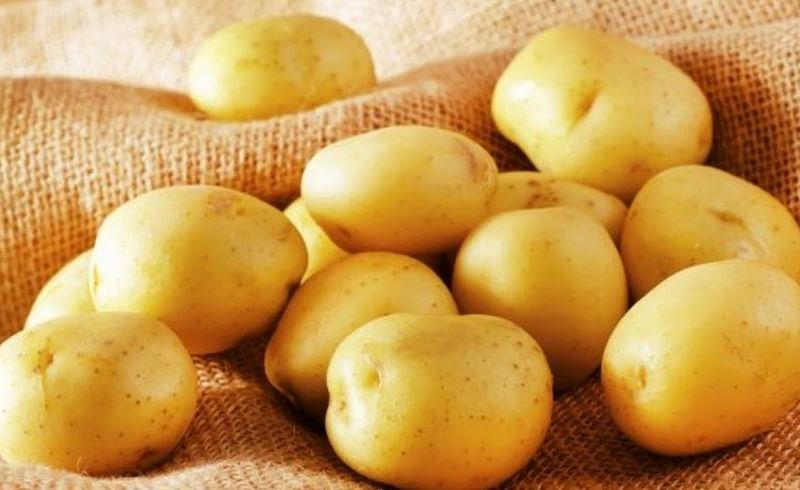 बटाट्याचं शास्त्रीय नाव काय? SSC CHSL परिक्षेतील सहा रंजक प्रश्न
