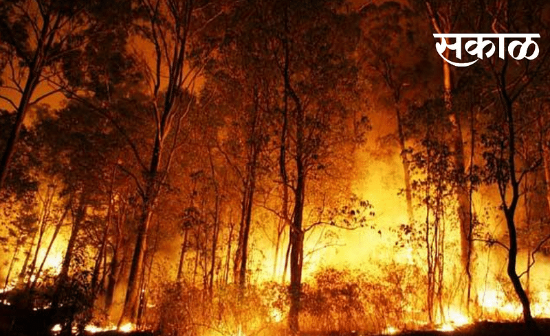 how to escape forest from fire nagpur news