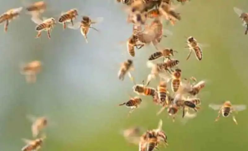An old man dies in a bee attack