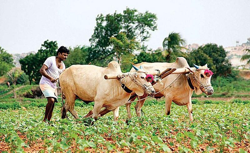 farmers-.jpg