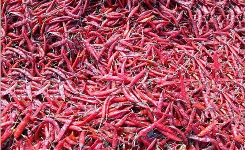 Red chillies become red chillies