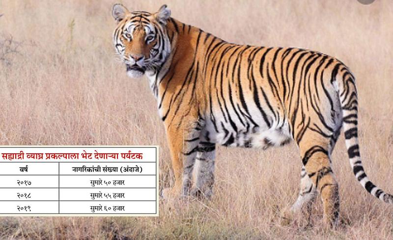 Tourist trends towards jungle safari