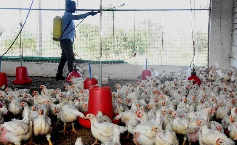 Bird Flu: राज्यातील 22 जिल्ह्यांमध्ये 'बर्ड फ्लू'चा प्रभाव