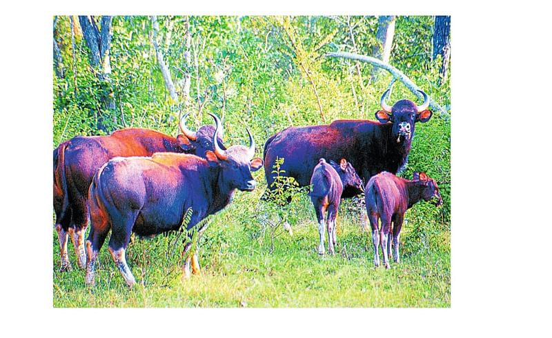 1678 Hectare Agriculchar Land Unuse In Ajara Taluka Kolhapur Marathi News