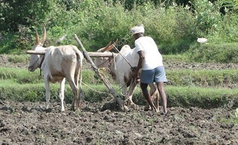 The farmer quarantine in the field