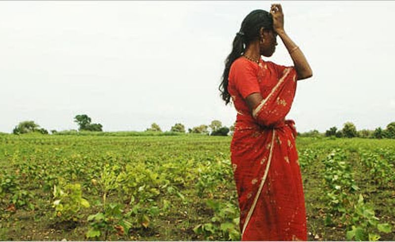 farmer commited suicide akola.jpg