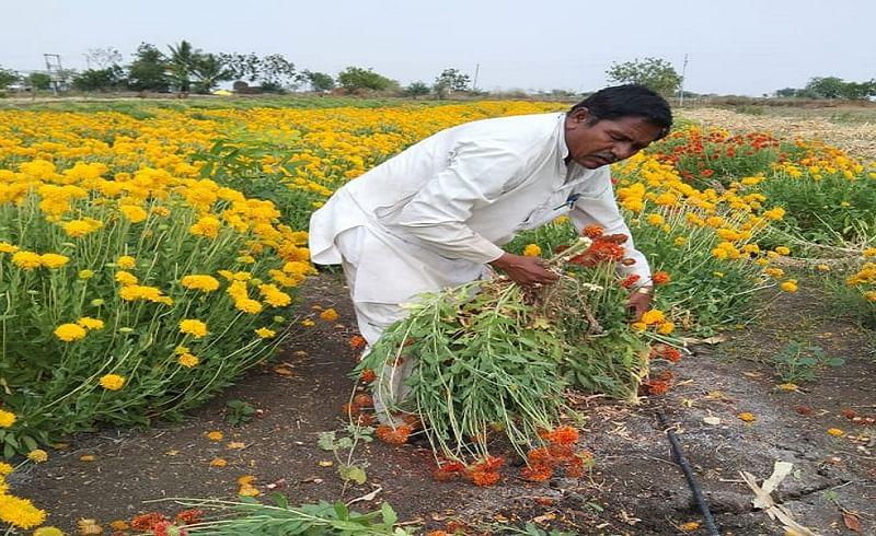 ausa farmer