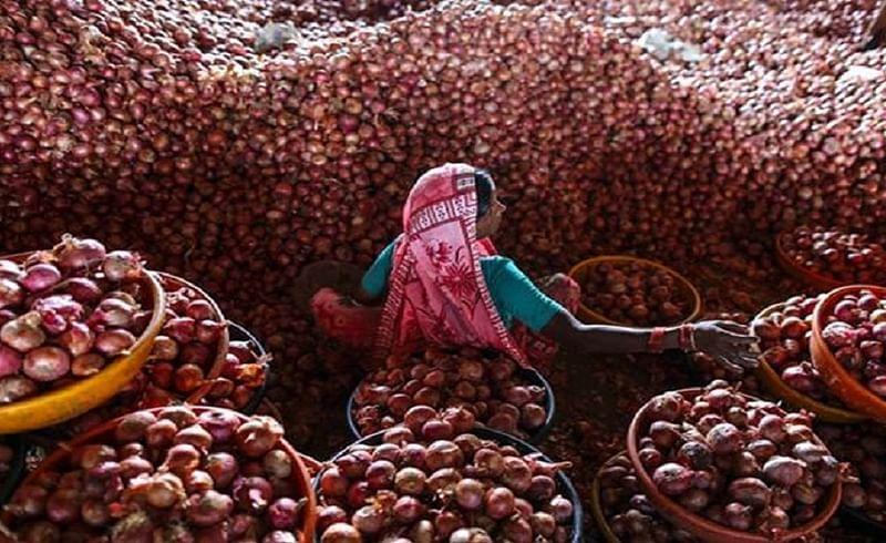 onion price 4.jpg