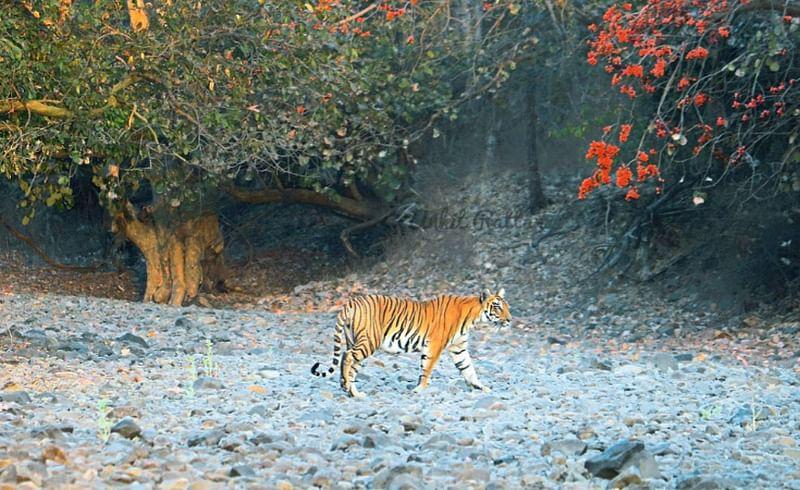 बोर : जैवविविधतेचं जंगल