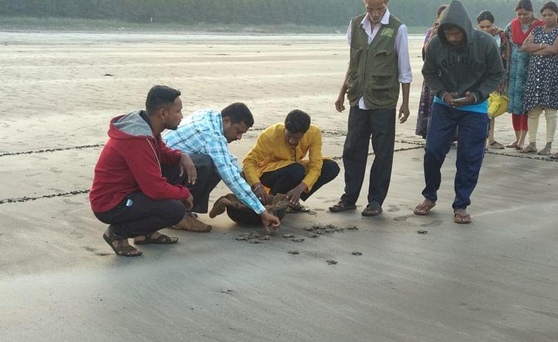 Olive Ridley Sea Turtle Festival In Kelashi Ratnagiri Marathi News