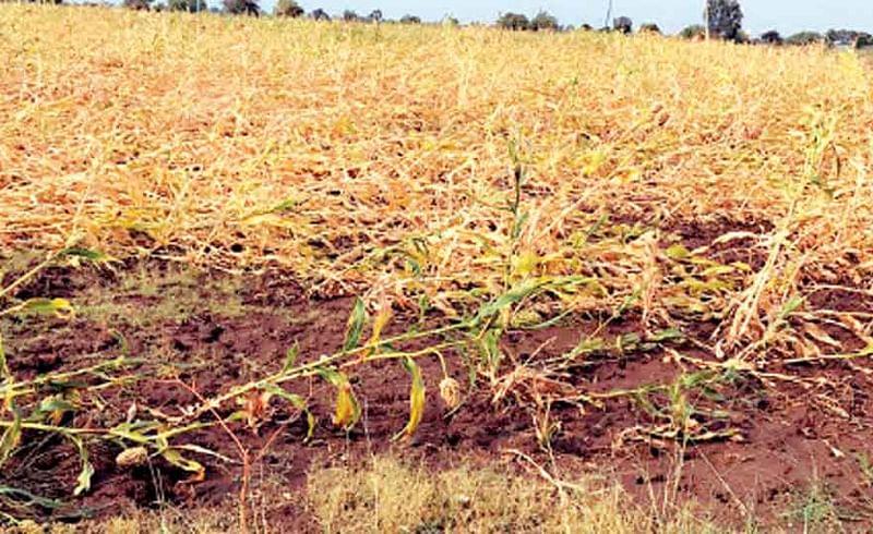 गारपिटीने शेतकऱ्यांचे कंबरडे मोडले; 52 हेक्टरांतील पिके मातीमोल