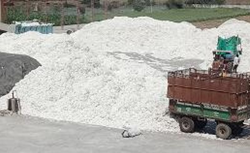 Cotton purchase of Rs 147 crore at Shegaon