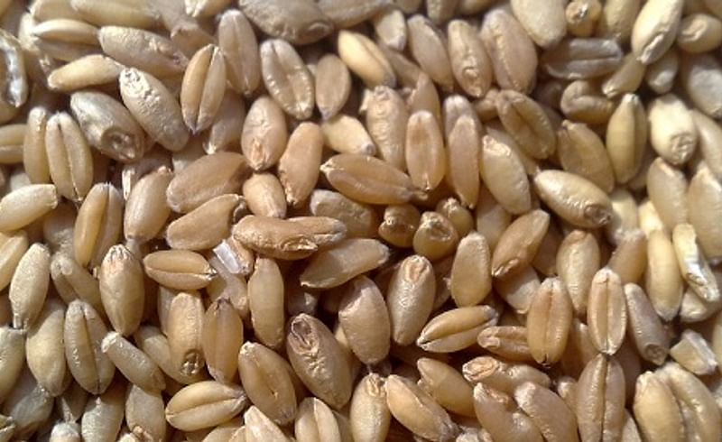 Wheat stopped coming from Madhya Pradesh in district...